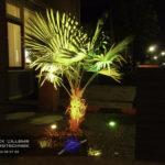 Sfeervolle kleurenverlichting in uw tuin? Bel Patrick Willems Elektrotechniek